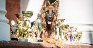 Concours canin : les chiens les plus cotés